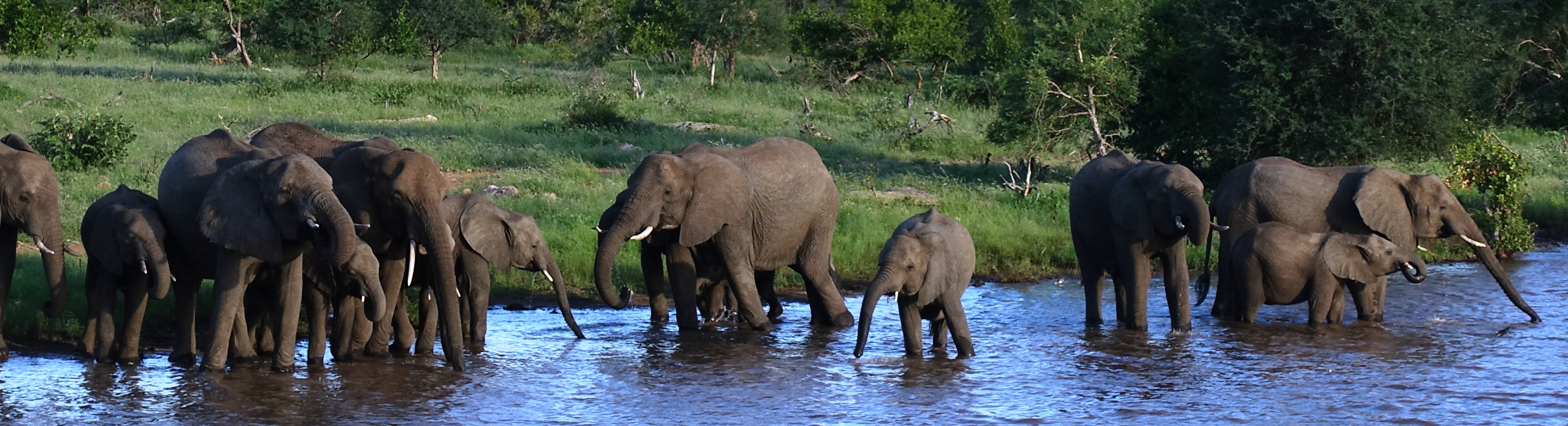 South African Golf Tour 2019 - Elephants